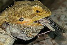 Exotic Animal Articles / This board is all about exotic pet animal articles.