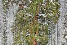 ...azok a csodálatos...fák!