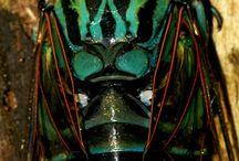 Kevers vliegen muggen,