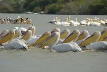 Senegal, West Africa / Senegal has many interesting sites including Goree Island, Djoudj National Bird Sanctuary, Pink Lake and beautiful beaches.