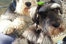 Customer Photos / Amazing photos our customers have sent us of their pooches