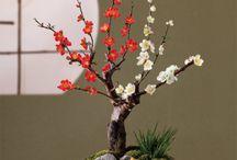 Bonsai / by Nina Johnson