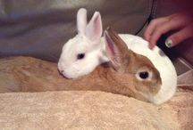 Bugs and coco my bunnys