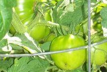 Organic gardening / Green life :)