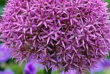 Flowers / by Linda Martinez