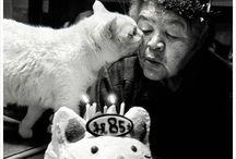Cats / Animals