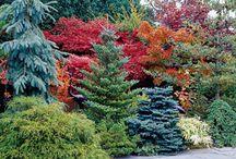 Plants for Mon's garden