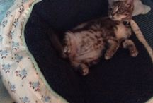 Kittens / Cute