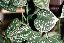 Gröna växter  jag HAR