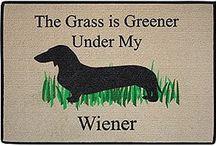 Wiener Dogs! / by Roger Wilson