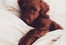 ℒ Unsere vierbeinigen Freunde / Für Hunde, Katzen, Hasen, Hamster & Co. – alles, was Haustiere glücklich macht /ℒ