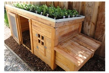 Homes For Chickens / Coops, runs. Places for chickens to live.