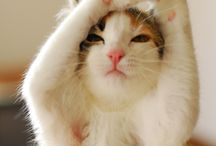 paws&furs / Pet them!!!