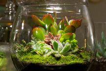 Sukulen dan kaktus mini