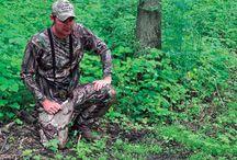 Deer food plot