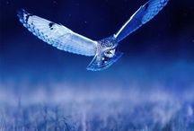 | DARK BLUE | / каждый охотник желает знать где СИДИТ фазан