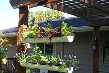 balcony ideas :: herb garden