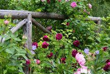 GardenIdeas<3