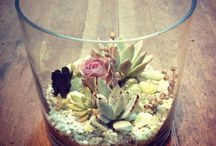 Plants and Succulents