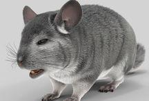 Animal 3D Models / http://www.turbosquid.com/Search/Artists/3d_molier-International