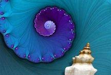 Fractal + / fractal, the golden ratio, fibonacci / by Dario Vega