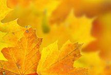 Yellow | Nature