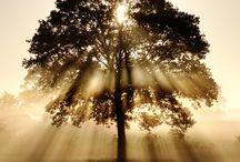 Trees / by Linda Gordon