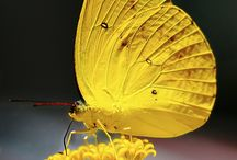 Beautiful buterflyes II