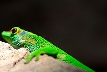 Amazing Pictures-Reptiles / Discover amazing pictures about reptiles.