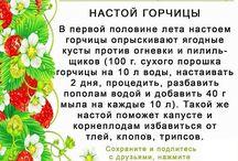 Дача +советы садоводов