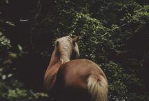 Hevoset & muut eläimet