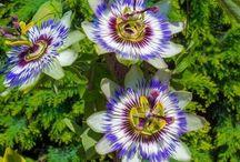 fleurs jardins