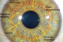 curso de iridologia