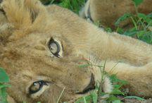 Safaris Kruger Social Media