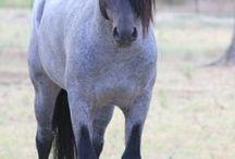 dream horse / by Megan Stanke