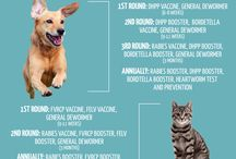 Vaccinate Your Pet