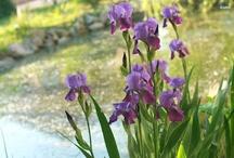 My Favorite Flowers / by Phyllis Orsburn Foote