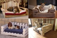 oggetti per i cani