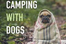 Happy Camper / All things camping. Recipes, campsite ideas, camping locations, hikes, etc.