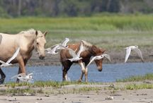 Assateague Island / Ocean City MD is located 20 minutes away from Assateague Island. Take a drive to Assateague and see the wildlife and wild ponies.