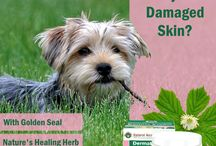 Dermal Cream / Natural hydrating lotion Dermal Cream is a natural alternative, suitable for dry and broken skin. Easy to apply, deeply nourishing and non greasy. Contains 10 key ingredients including the finest natural plant extracts for your pets skin.