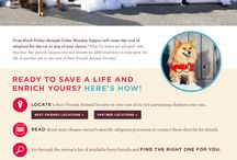Best Friends Pet Adoption / In honor of the most wonderful time of year, Zappos is giving the opportunity to add to your family with free dog and cat adoptions from Best Friends Animal Society! / by Zappos