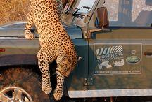 {African Safari}