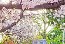 Gorgeous Japan
