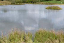 LAKES / Property and land for sale incorporating Lakes