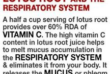 lotus roots and the respiratory problems