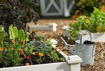 Garden Ideas / Anything and everything to improve our mini-garden crops. / by Leslie Caldwell