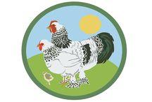 tavuk çiftliği açilışı
