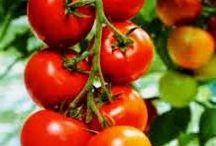 10 Manfaat Buah Tomat Bagi Kesehatan Tubuh