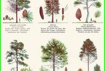 alberi e loro forme